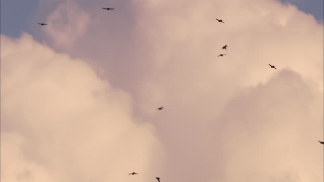 tree swallows dart around a cloudy blue sky. - cloud sky stock videos & royalty-free footage