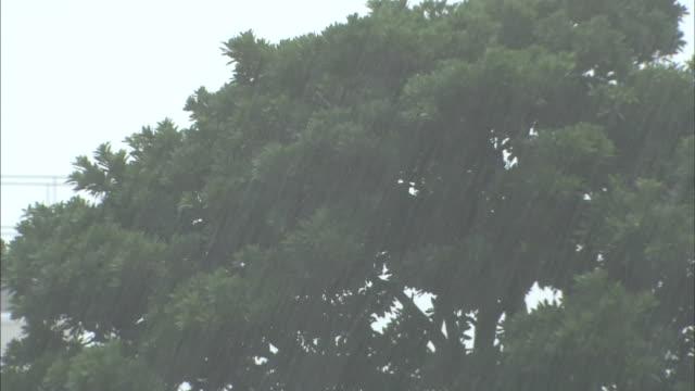 a tree sways in a rain storm. - abblenden stock-videos und b-roll-filmmaterial