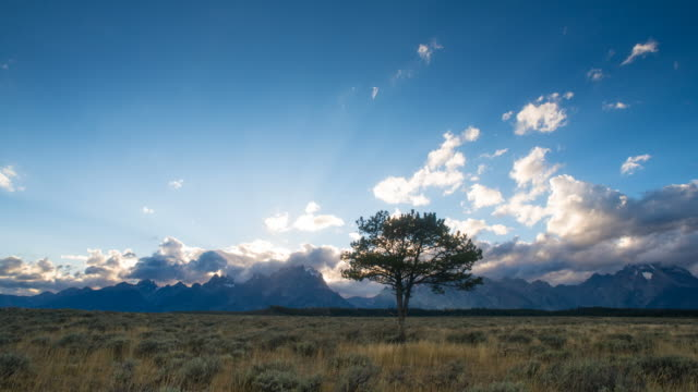 tree time lapse in grand teton national park - grand teton stock videos & royalty-free footage