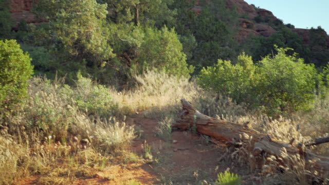 tree to mountain - sedona stock videos & royalty-free footage