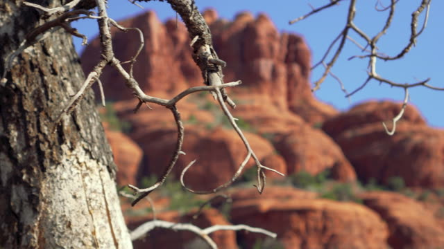 tree to the bell tower - sedona stock videos & royalty-free footage
