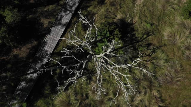tree top - florida us state stock videos and b-roll footage