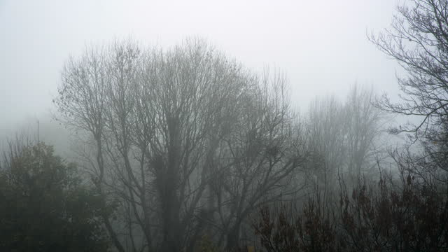 tree tops move gently in thick fog - bare tree stock videos & royalty-free footage