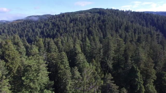 OVER tree tops pan to river Redwood Forest, Aerial, 4K, 46s, 50of50, Forest Trees, Northern California Tallest trees in the world, Sun flare, Hyperion Tree, world record, Stock Video Sale - Drone Discoveries 4K Nature/Wildlife/Weather Drone aerial video