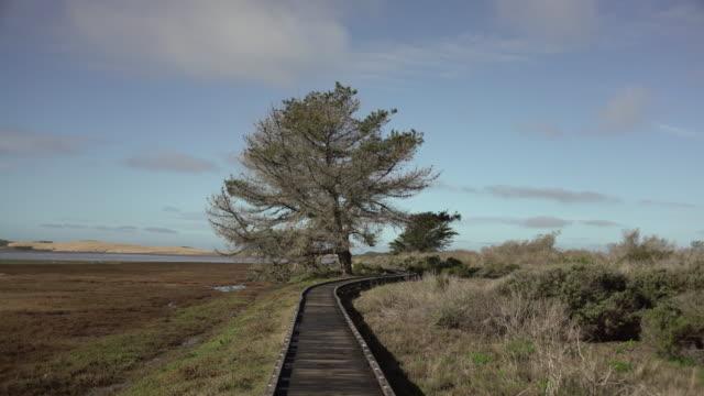 vídeos y material grabado en eventos de stock de tree trail - parque natural