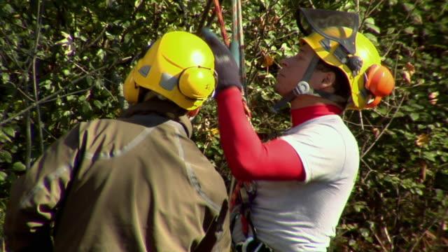 vídeos y material grabado en eventos de stock de cu tree trimmer climbing tree, ann arbor, michigan, usa - ann arbor