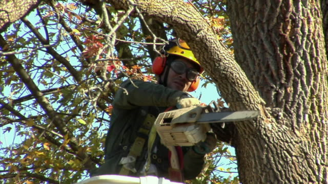 MS LA Tree trimmer cutting tree limb with chainsaw, Ann Arbor, Michigan, USA