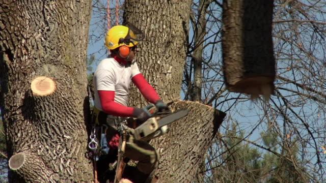 vídeos de stock e filmes b-roll de ms tree trimmer cutting tree limb with chainsaw, ann arbor, michigan, usa - protetor de ouvido