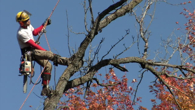 ms la tree trimmer descending tree on rope, ann arbor, michigan, usa - imbracatura di sicurezza video stock e b–roll
