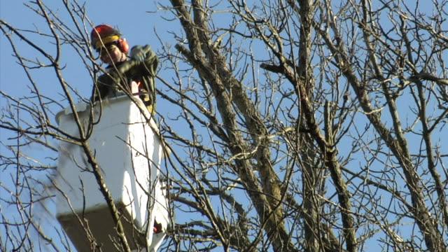 ms la tree trimmer in cherry picker cutting tree branch, ann arbor, michigan, usa - cherry picker stock videos & royalty-free footage