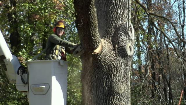 zi ms tree trimmer in cherry picker cutting tree branch, ann arbor, michigan, usa - cherry picker stock videos & royalty-free footage