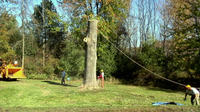 ws zi tree trimmer sawing at base of large ash tree, ann arbor, michigan, usa - ash tree stock videos & royalty-free footage