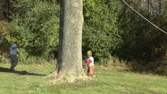 zo ws tree trimmer sawing at base of large ash tree, ann arbor, michigan, usa - ash tree stock videos & royalty-free footage