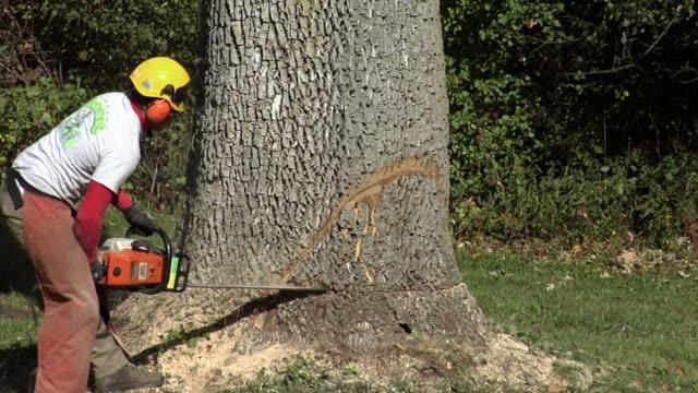 vídeos de stock e filmes b-roll de ms tree trimmer sawing at base of large tree, ann arbor, michigan, usa - protetor de ouvido