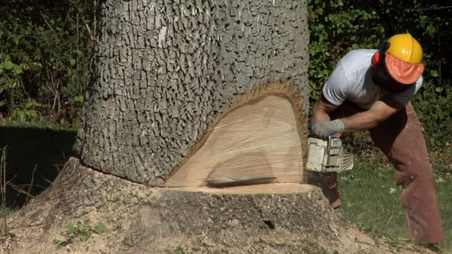 vídeos y material grabado en eventos de stock de ms tree trimmer sawing at base of large tree, ann arbor, michigan, usa - ann arbor