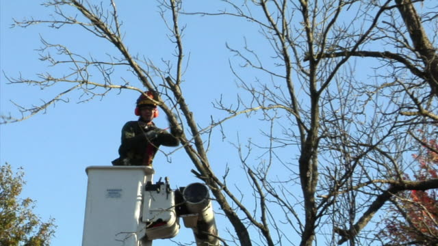 zo ws tree trimmer sawing tree branch from cherry picker, ann arbor, michigan, usa - cherry picker stock videos & royalty-free footage