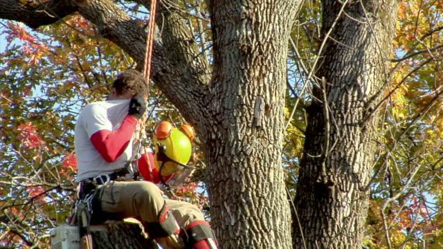 vídeos y material grabado en eventos de stock de ms tree trimmer sitting on cut off branch and taking off hardhat, ann arbor, michigan, usa - encuadre de tres cuartos