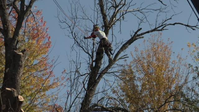 vídeos y material grabado en eventos de stock de zo ws tree trimmers at work, ann arbor, michigan, usa - ann arbor