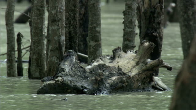 Tree trunk bobs in swollen river Available in HD.