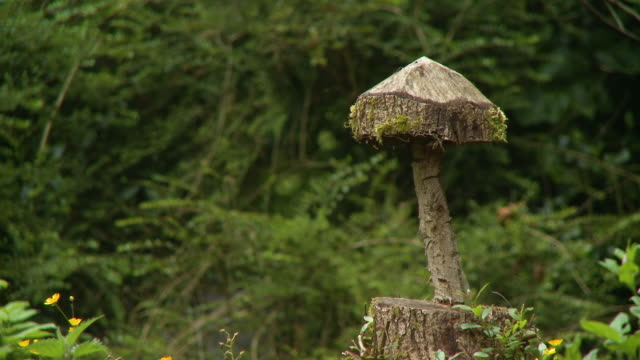 a tree trunk carved like a mushroom - axe stock videos & royalty-free footage