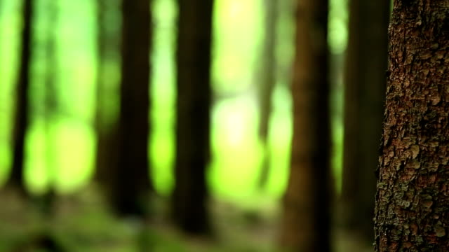 tree trunk in coniferous forest close-up pan - spruce stock videos & royalty-free footage