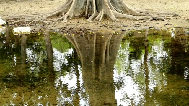 Tree trunk reflection in the park, Bangkok
