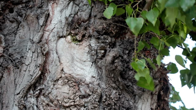 tree trunk with leaves - plant bark stock videos & royalty-free footage