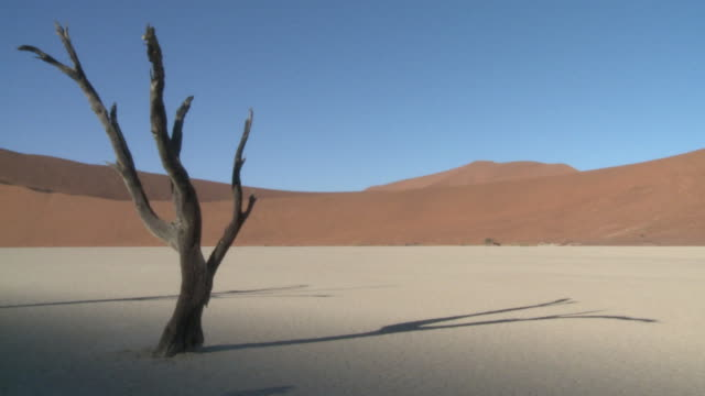 Tree trunks in barren scene, Dead Vlei, Namib-Naukluft, Namibia