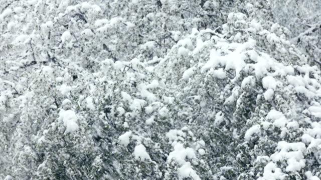 Tree under heavy snowing
