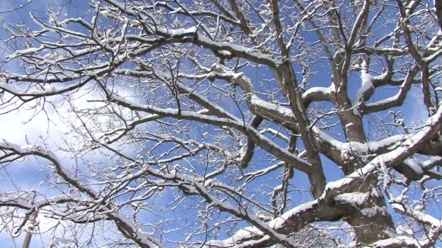 hd : tree (under the snow ) - snow cornice stock videos and b-roll footage