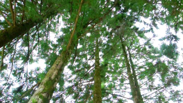 tree - earth goddess stock videos & royalty-free footage