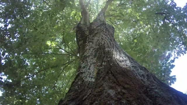 のツリー - 枝点の映像素材/bロール