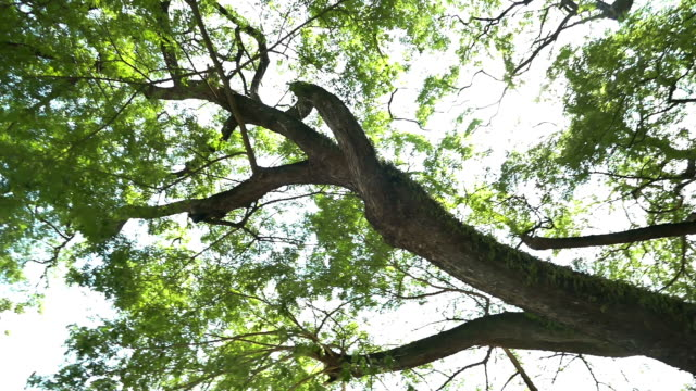 tree - oak tree stock videos & royalty-free footage