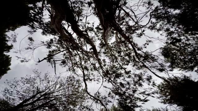 tree - memories stock videos & royalty-free footage
