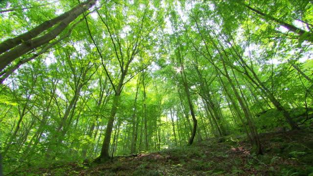Tree views in National Park Thayatal (Austria)