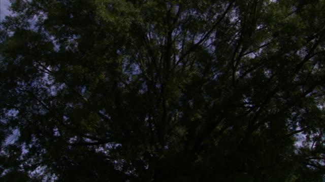 Tree w/ wide limbs green leaves REVERSE PAN TU WS James Buchanan statue tree limbs FG w/ Duke Chapel bell tower BG
