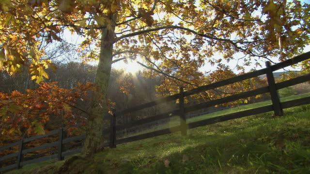 vídeos de stock, filmes e b-roll de tree with fall color next to field - parélio