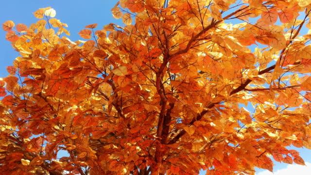 Baum mit goldenen Blättern