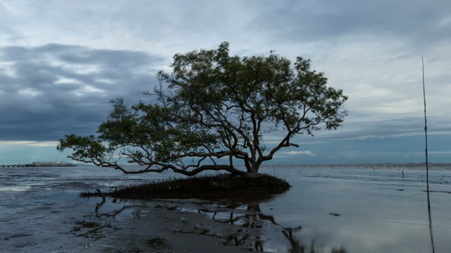 tree with spring tides time-lapse - tide stock videos & royalty-free footage