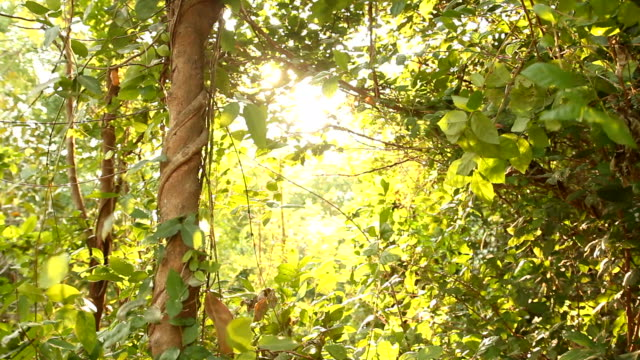 木、太陽といわれる街から