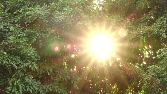 木、太陽といわれる街から - パン効果点の映像素材/bロール