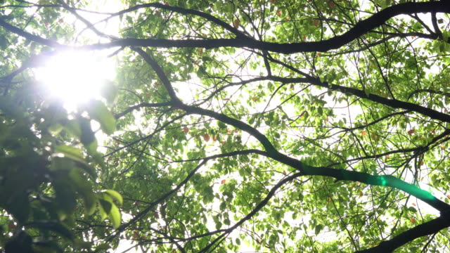 tree with sun - vegetable garden stock videos & royalty-free footage