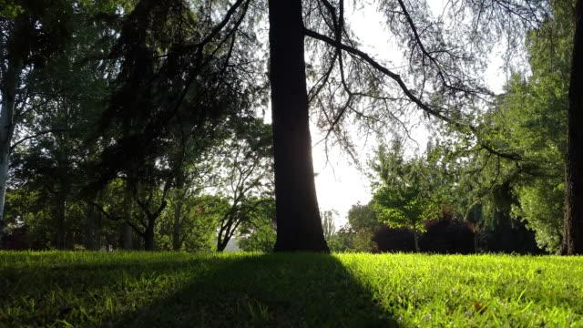 árbol con sunrise sunset Time-lapse y llamarada en un parque en madrid