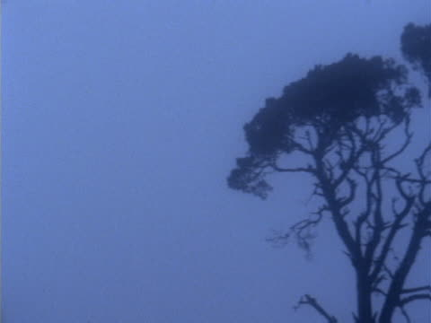 Tree with twisted branches and leafy crown  in fog