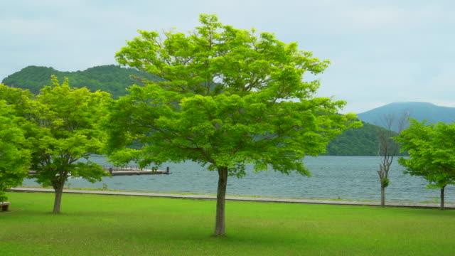 vídeos de stock e filmes b-roll de tree with view at lake towada japan - paisagem cena não urbana