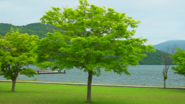 tree with view at lake towada japan - aomori prefecture stock videos & royalty-free footage