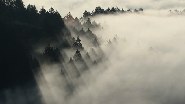 treefog - nordkalifornien stock-videos und b-roll-filmmaterial