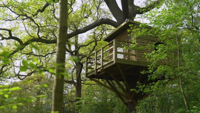 treehouse in treetops - treehouse stock videos & royalty-free footage