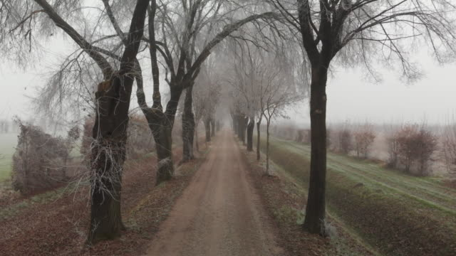 tree-lined avenue with frost and white frozen branches, padan plain, veneto, italy. - frozen stock videos & royalty-free footage