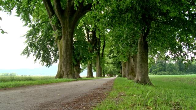 hd dolly: von bäumen gesäumten schotterstrecke - von bäumen gesäumt stock-videos und b-roll-filmmaterial